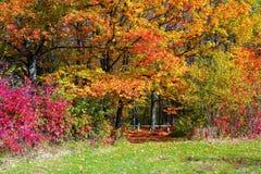 La traînée large couverte de feuilles tombées, des côtés dont élevez les arbres avec les feuilles toujours vertes et déjà jaunes Images stock