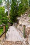 La traînée scénique et belle de tourisme dans les bois s'approchent de la rivière Image libre de droits