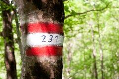 La traînée se connectent un chemin 231 photos stock