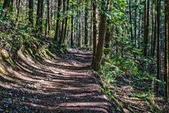 La traccia attraverso gli alberi alti nelle cadute bagnate di un Cypress della foresta parcheggia la Columbia Britannica Canada Fotografia Stock