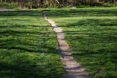 La traccia di camminata nelle sequoie insegue il parco - il Distretto di Rotorua fotografia stock libera da diritti