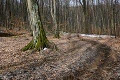 La traccia di escursione in foresta in primavera o l'autunno condisce Fotografie Stock Libere da Diritti