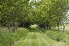 La traccia ha allineato con gli alberi Fotografie Stock Libere da Diritti
