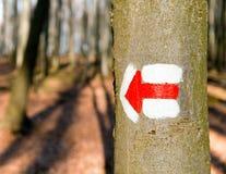 La traccia rossa di escursione o del turista firma i simboli sull'albero dell'albero Fotografia Stock