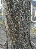 La tradition de mettre des beatas de bubble-gum et de cigarette sur un arbre près de la tombe de Jim Morrison chez Pere Lachaise  photographie stock