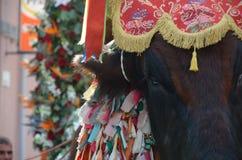 La tradition et les gens de la Sardaigne image libre de droits