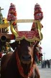 La tradition et les gens de la Sardaigne photographie stock libre de droits