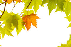 la trame décorative de fond d'automne d'isolement part du blanc d'enregistrement Photographie stock libre de droits