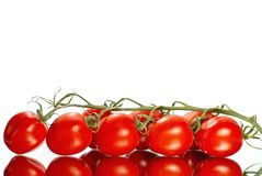 La trame fraîche de tomates a reflété leur forme Images stock