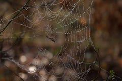 La trampa de la araña Fotos de archivo libres de regalías