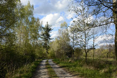 La trayectoria arenosa alineó por los árboles, República Checa, Europa Imagen de archivo libre de regalías