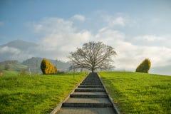 La trayectoria corta que lleva hacia árbol dominante en pequeño cementerio cerca de Kussnacht es Rigi imagen de archivo