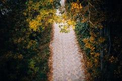 La trayectoria de las piedras de pavimentación Fotografía de archivo libre de regalías