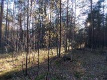 La trayectoria de la luz en el bosque imagen de archivo