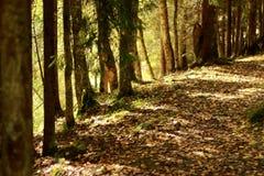 La trayectoria del otoño en el bosque, las hojas amarillas miente en la tierra Fotos de archivo libres de regalías