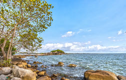 La trayectoria del pequeño árbol de la isla Imagen de archivo libre de regalías