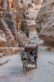 La trayectoria del siq en la ciudad nabatean de petra Jordania Imágenes de archivo libres de regalías
