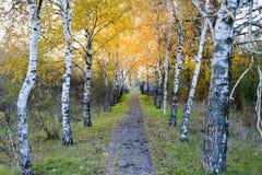La trayectoria derramada con las hojas del amarillo del otoño de árboles Autumn Alley Fotografía de archivo