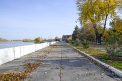 La trayectoria derramada con las hojas del amarillo del otoño de árboles Autumn Alley Imagenes de archivo
