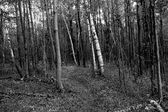 La trayectoria en bosque Fotografía de archivo libre de regalías