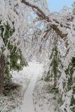La trayectoria en bosque del invierno Imagen de archivo