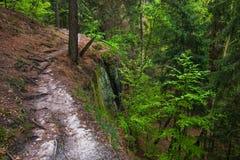 La trayectoria en el bosque Fotos de archivo