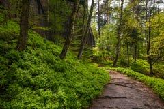 La trayectoria en el bosque Imágenes de archivo libres de regalías