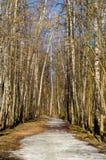 La trayectoria en el bosque Imagen de archivo libre de regalías