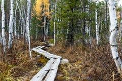 La trayectoria en el bosque Foto de archivo libre de regalías