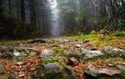 La trayectoria en el bosque del otoño foto de archivo libre de regalías