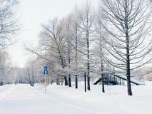 La trayectoria en el bosque nevoso Imágenes de archivo libres de regalías