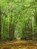 La trayectoria en el bosque verde del verano Foto de archivo libre de regalías