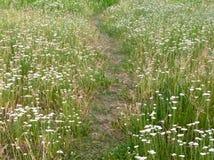 La trayectoria en el prado del verano Fotos de archivo