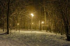 La trayectoria en un Forest Park se llenó de nieve Fotografía de archivo libre de regalías