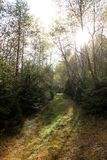 La trayectoria en un prado en día soleado Imagen de archivo