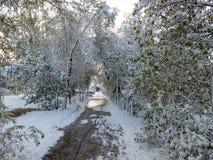 La trayectoria entre los árboles en la nieve Foto de archivo