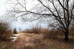 La trayectoria entre los árboles en un día frío Foto de archivo