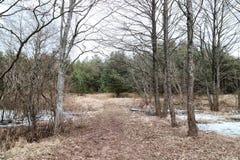 La trayectoria entre los árboles en un día frío Fotografía de archivo