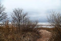 La trayectoria entre los árboles en un día frío Fotografía de archivo libre de regalías