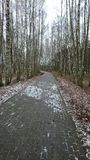 La trayectoria gris en el parque medio con los abedules Foto de archivo libre de regalías