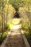 La trayectoria, la trayectoria que lleva adelante, otoño en el bosque Foto de archivo libre de regalías