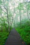 La trayectoria a lo largo del acantilado en la niebla de la mañana Fotografía de archivo