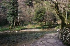 La trayectoria a lo largo del río en el bosque Fotos de archivo