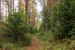 La trayectoria meandring en un bosque Imagenes de archivo