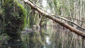 La trayectoria para descubrir el bosque de Melaleuca almacen de metraje de vídeo