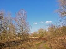 La trayectoria que camina con el abedul desnudo y el otro árbol enarenan arbustos en un día de invierno soleado con el cielo azul Fotografía de archivo libre de regalías