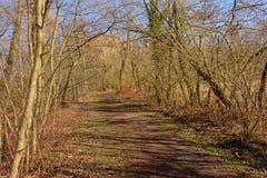 La trayectoria que camina con los árboles desnudos enarena arbustos en un día de invierno soleado con el cielo azul claro Fotos de archivo libres de regalías