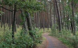 La trayectoria secreta en el bosque invita para explorar fotos de archivo libres de regalías