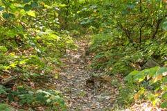 La trayectoria sucia del bosque del suelo y de la hoja pone verde el camino forestal para caminar Fotografía de archivo libre de regalías