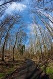 La trayectoria a través del árbol de madera y de la primavera corona en el cielo azul profundo Imagenes de archivo